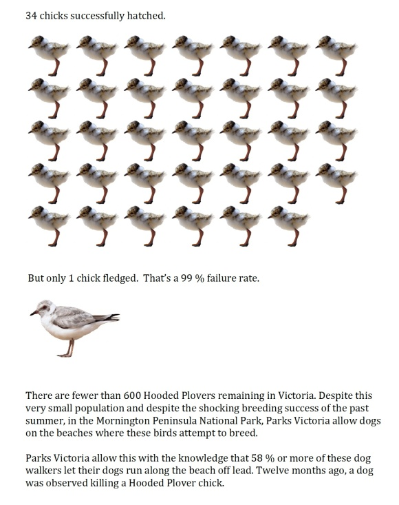 Chicks 2013-14
