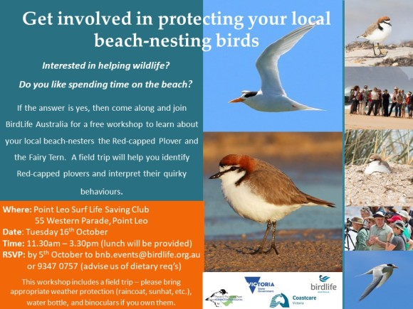 RCP Fairy tern Westernport Workshop